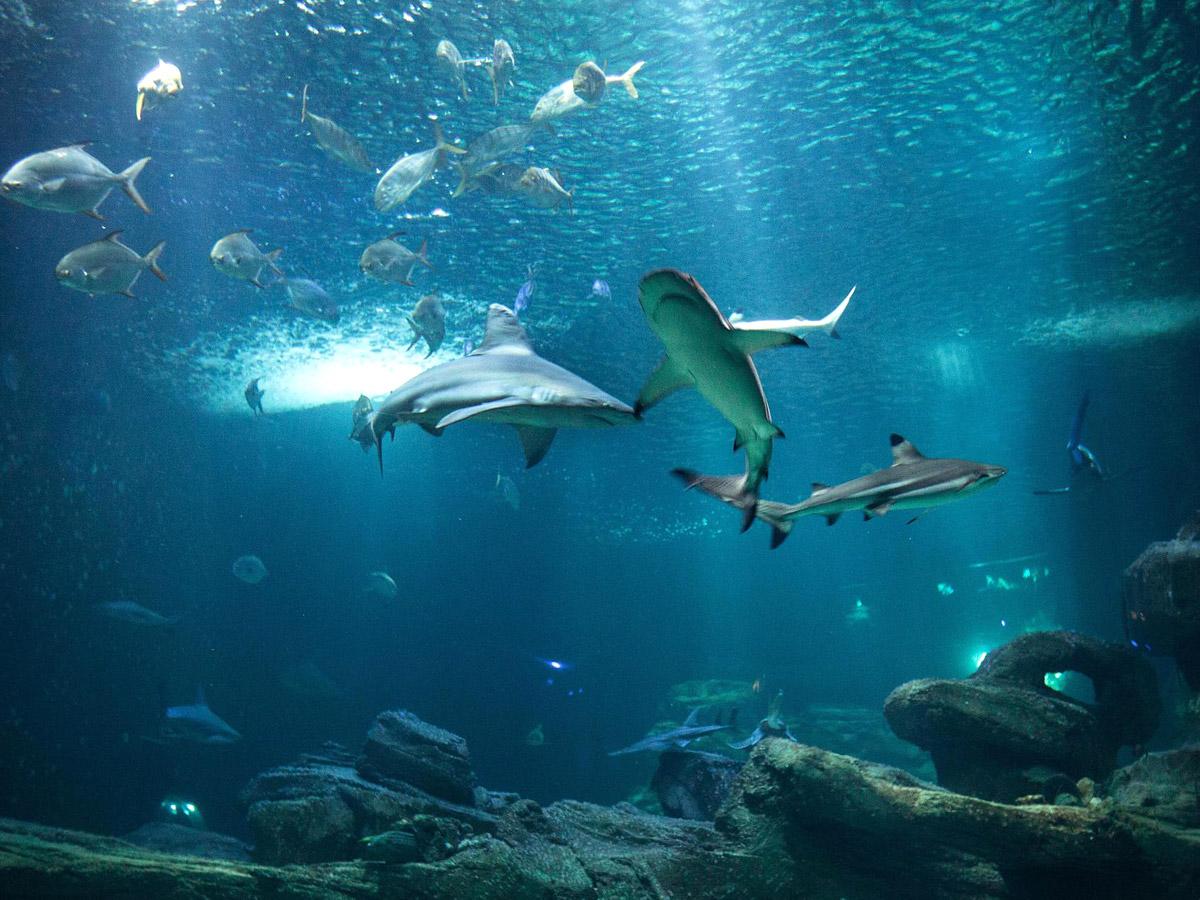 The Paris Aquarium - Visit and tickets